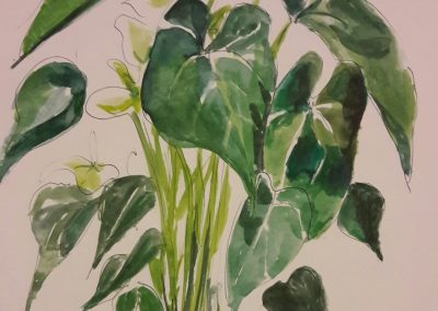 House plant – watercolour in sketchbook