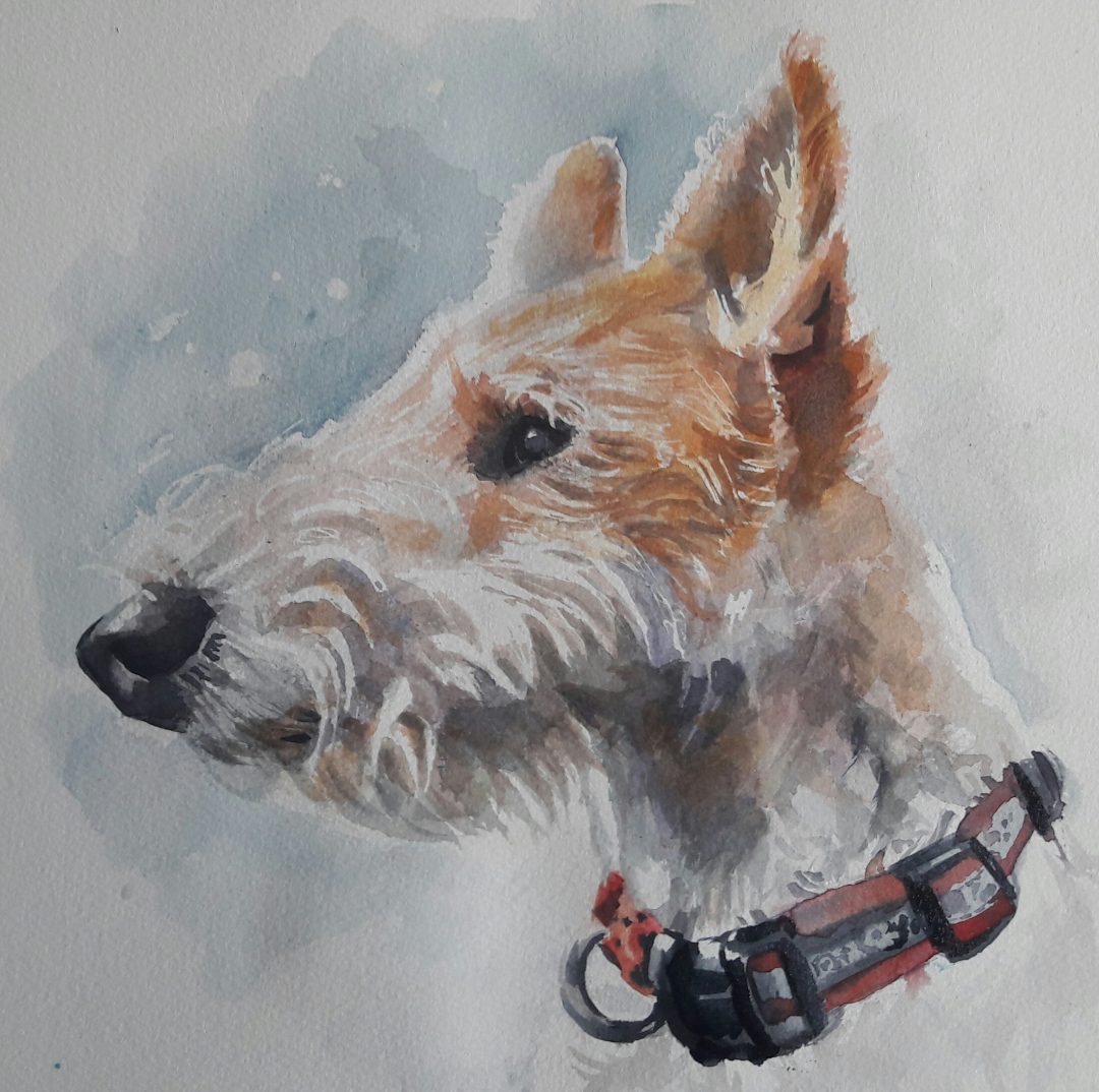 Flo the wire fox terrier in watercolour