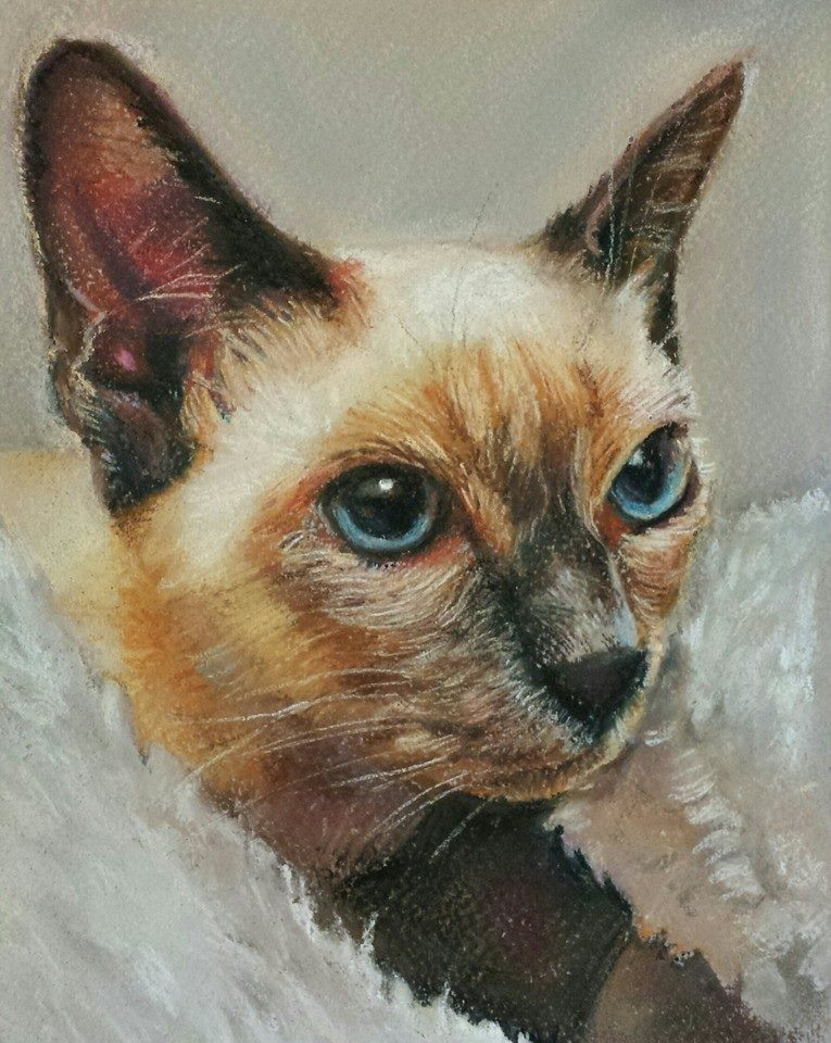 Siamese cat – pastel on paper