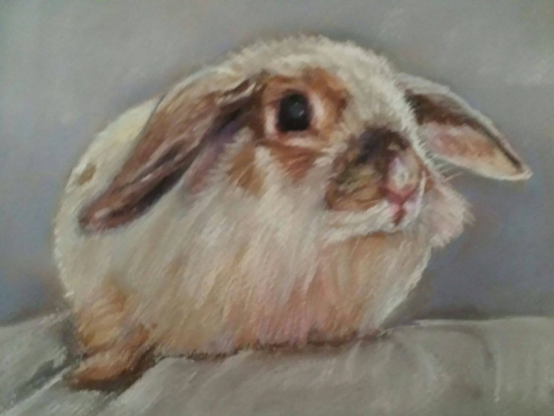 Rabbit – pastel on paper