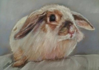 Rabbit – pastel on paper