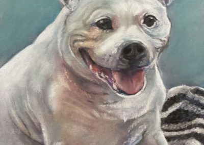 Staffie – pastel on paper