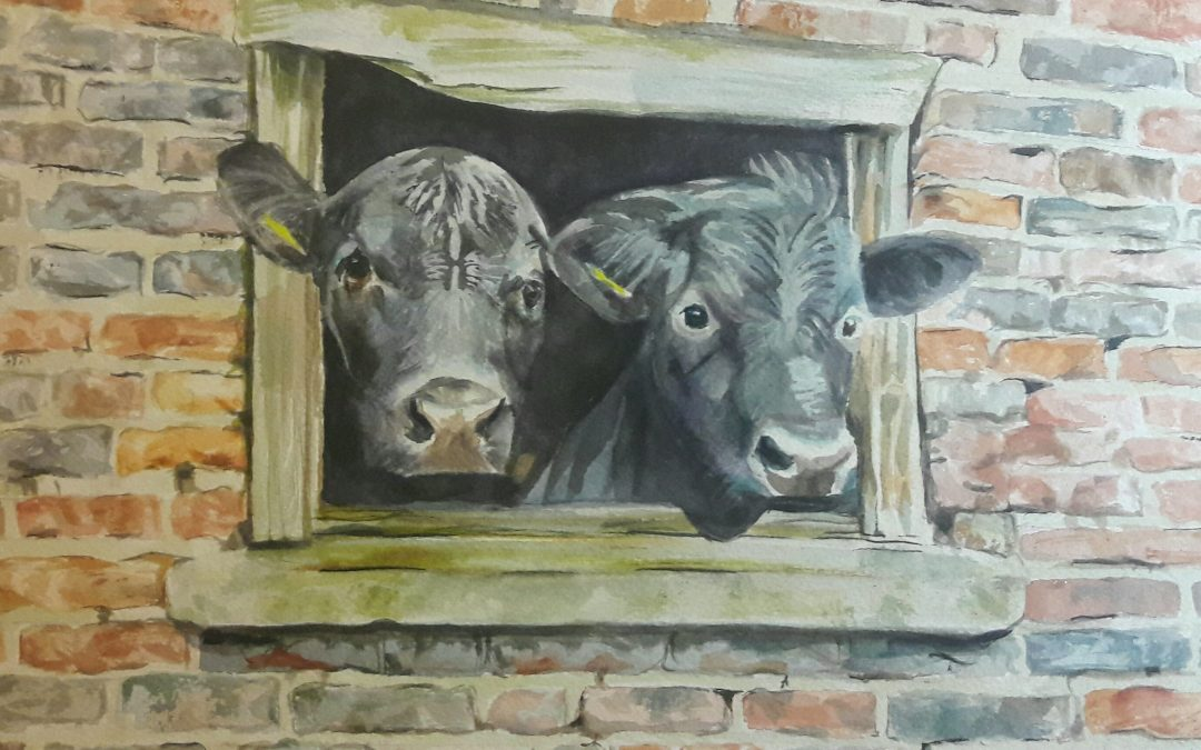Cows – watercolour on paper