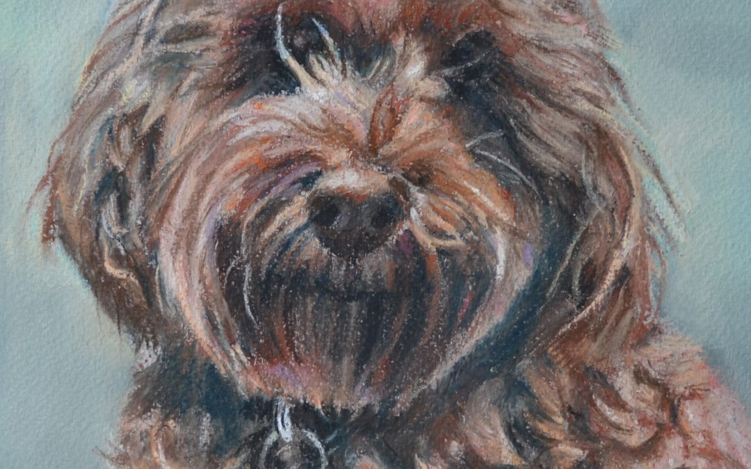 Molly – pastel on paper